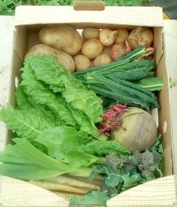 vegbox from communigrow food education charity